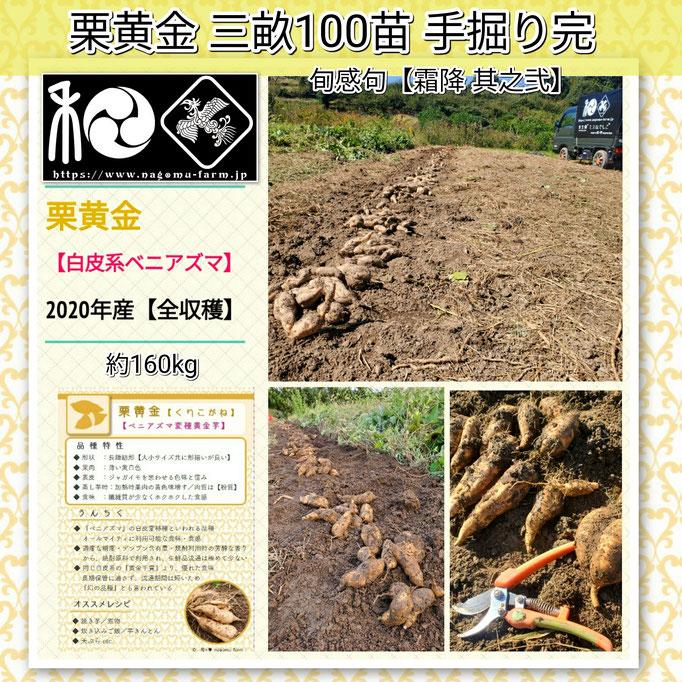 旬感句 【霜降 其之弐】 『栗黄金 三畝100苗 手掘り完』