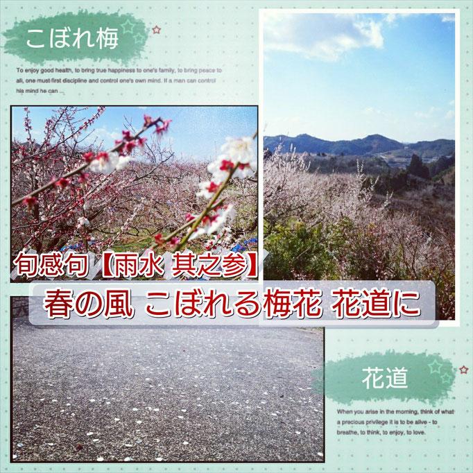 旬感句【雨水 其之参】 『春の風 こぼれる梅花 花道に』