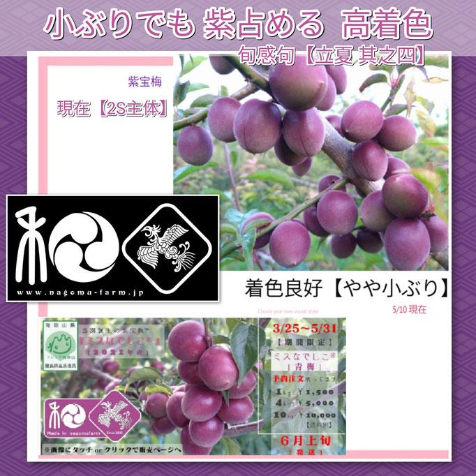 旬感句 【立夏 其之四】 『小ぶりでも 紫占める 高着色』