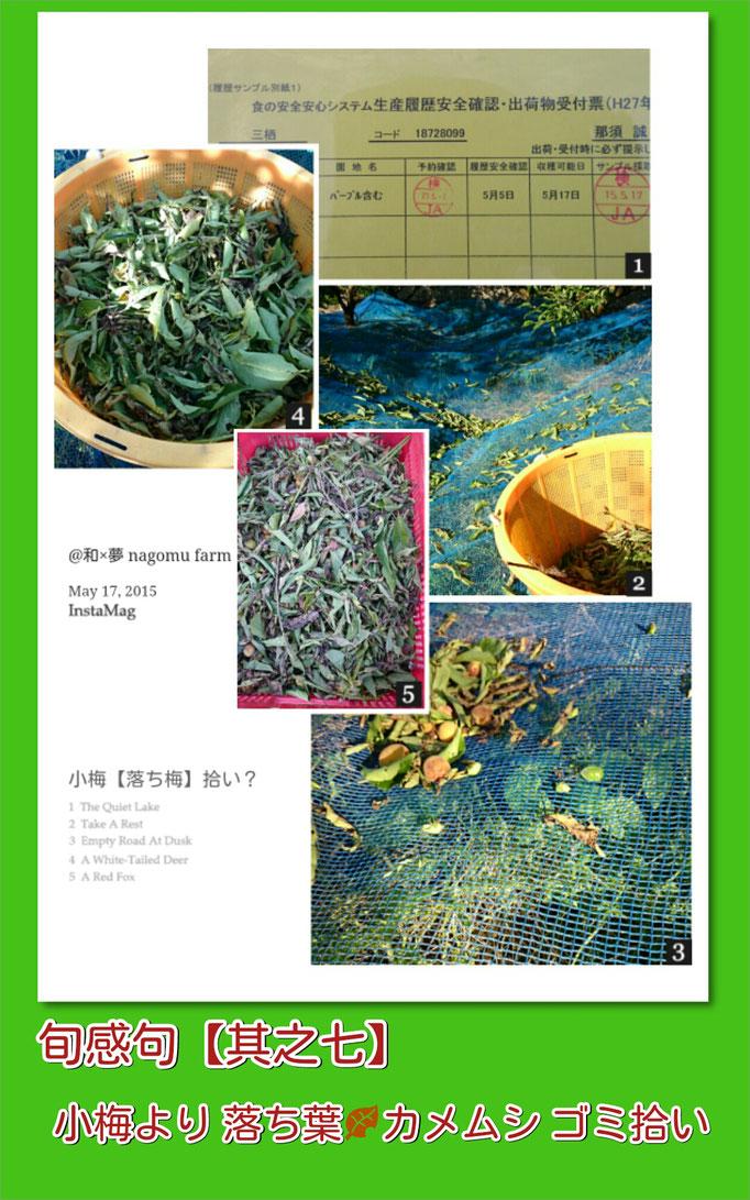 旬感句【立夏 其之五】小梅より 落ち葉 カメムシ ゴミ拾い