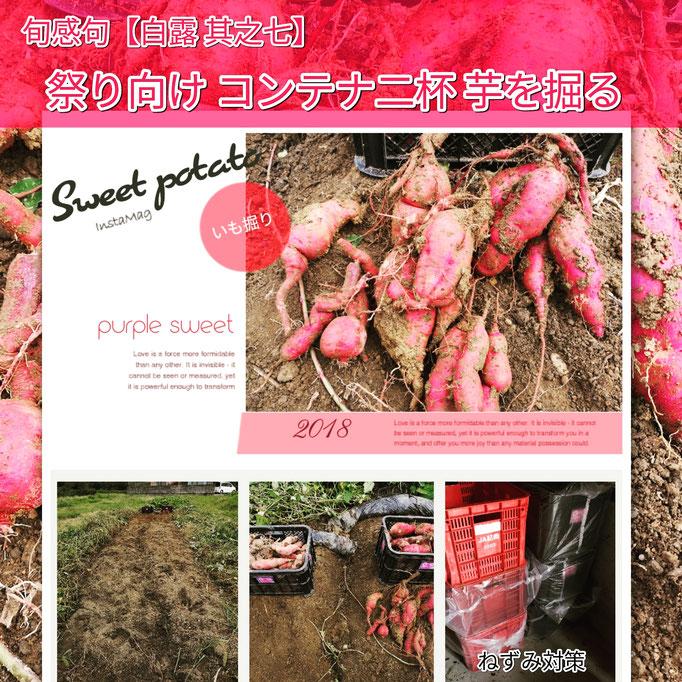 旬感句 【白露 其之七】 『祭り向け コンテナ二杯 芋を掘る』