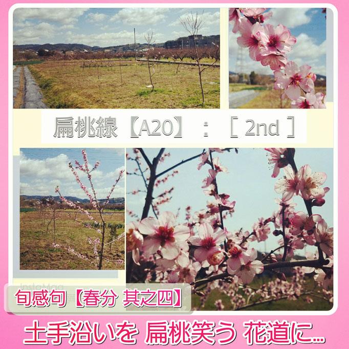 旬感句【春分 其之四】 『土手沿いを 扁桃笑う 花道に…』