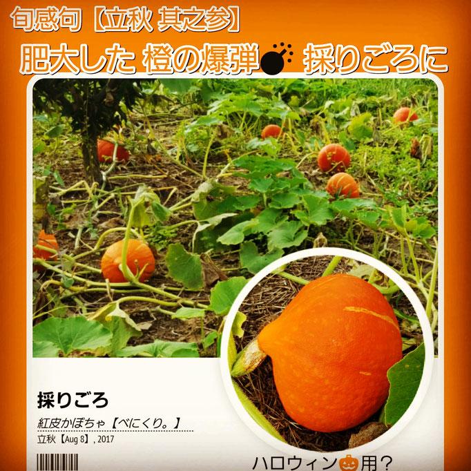 旬感句 【立秋 其之参】 『肥大した 橙の爆弾💣 採りごろに』