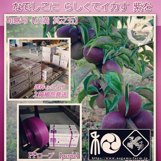 旬感句 【#小満 其之五】 『なでしこに らしくてイカす 紫を』