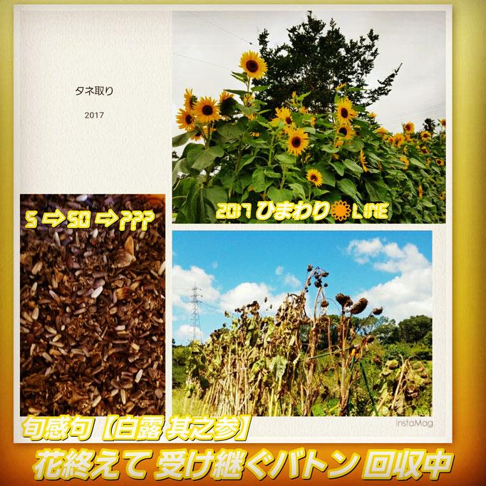 旬感句 【白露 其之参】 『花終えて 受け継ぐバトン 回収中』