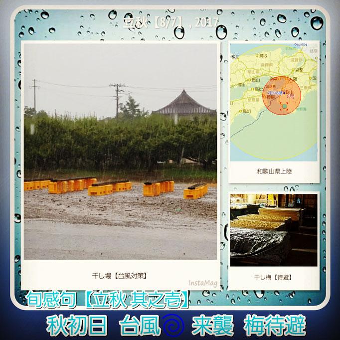 旬感句 【立秋 其之壱】 『秋初日 台風来襲 梅待避』