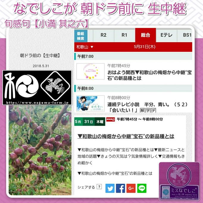 NHK『おはよう関西』 紫宝梅 生中継【5/31】 和×夢 nagomu farm