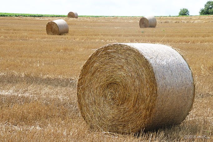 麦わらロール