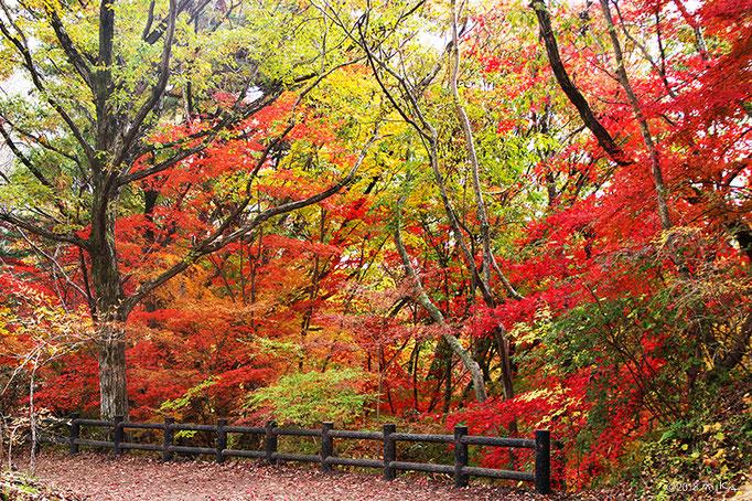 シアトルの森(神戸市立森林植物園)