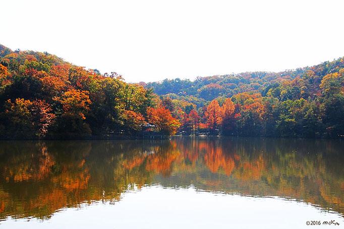 紅葉の宝ヶ池