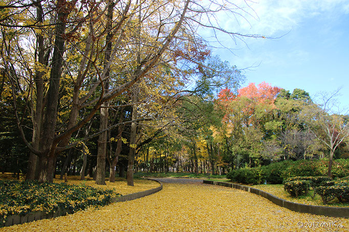 大阪城公園(秋)
