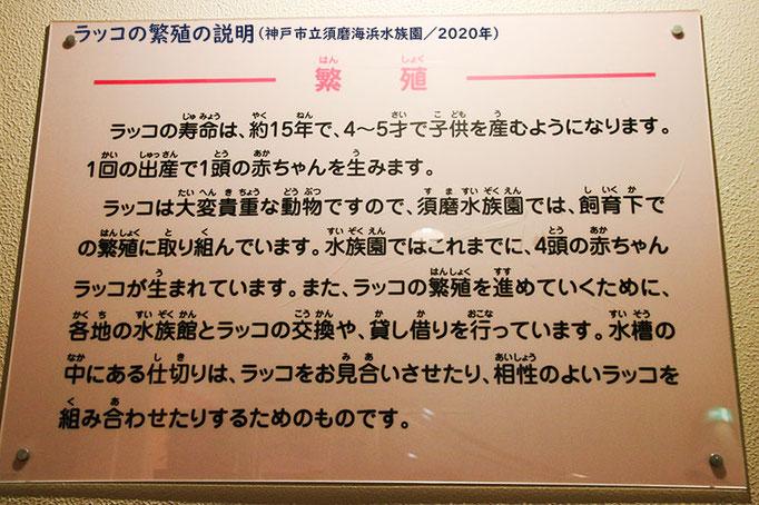 ラッコの繁殖について(神戸市立須磨海浜水族園)