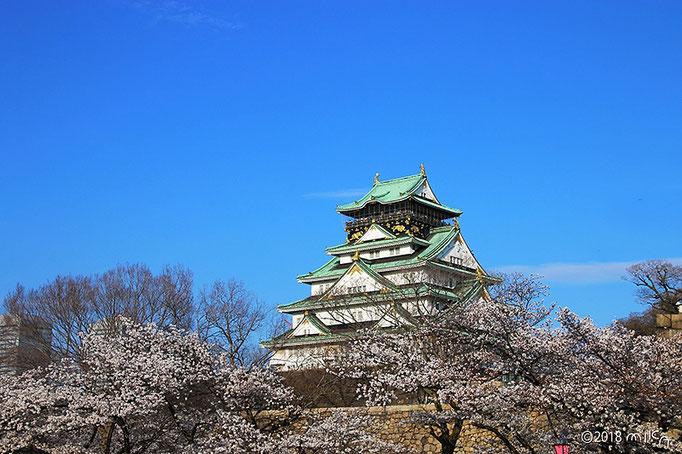西の丸庭園より桜の大阪城