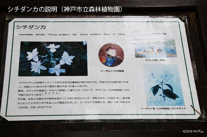 シチダンカの説明(神戸市立森林植物園)