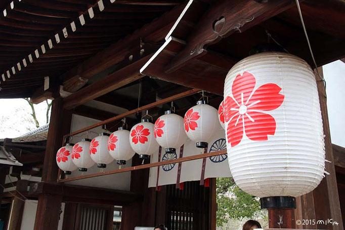 平野神社のお花見