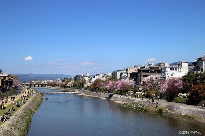桜満開(京都にて)