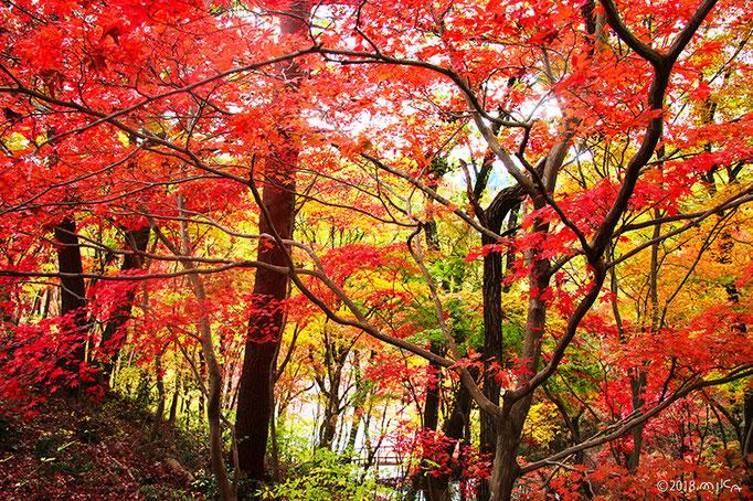 神戸市立森林植物園(秋)