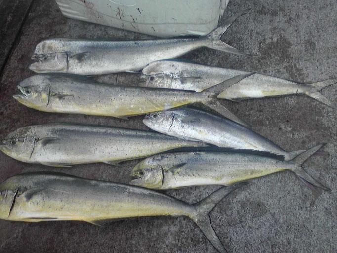 釣れる時は2~3人でバタバタ釣れまくり
