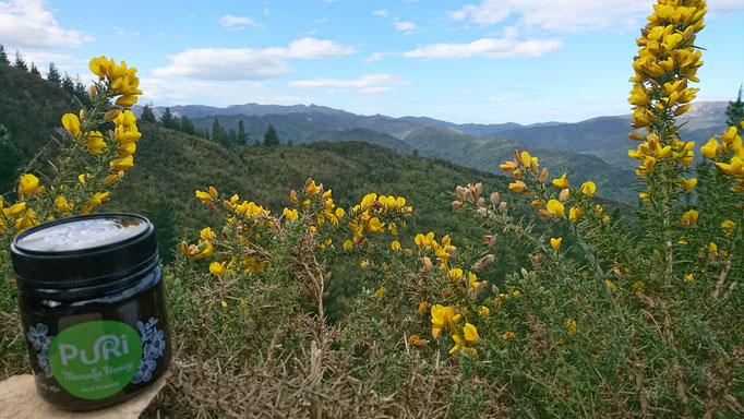 Powder Hill (Dunedin)