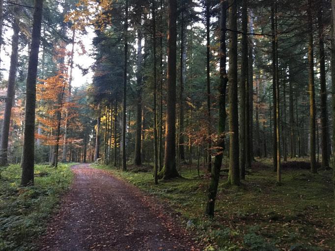 Durch solche Wälder fahren wir, und es ist wunderschön jetzt gemächlich unterwegs zu sein; obschon,  ich ziehe natürlich schon immer noch so fest ich kann. Das lasse ich mir nicht nehmen.