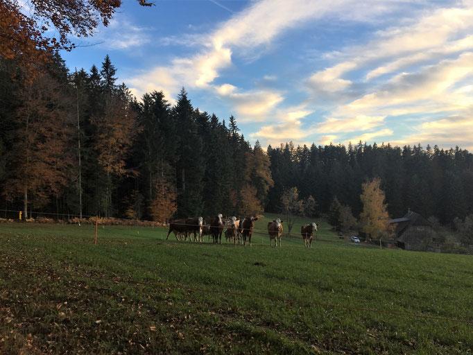 Kumpels vom nahen Bauernhof. Als sie uns sahen, kamen sie alle angerannt, als wollten sie auch mitmachen. Wer weiss - was sie wohl für Vorfahren haben?