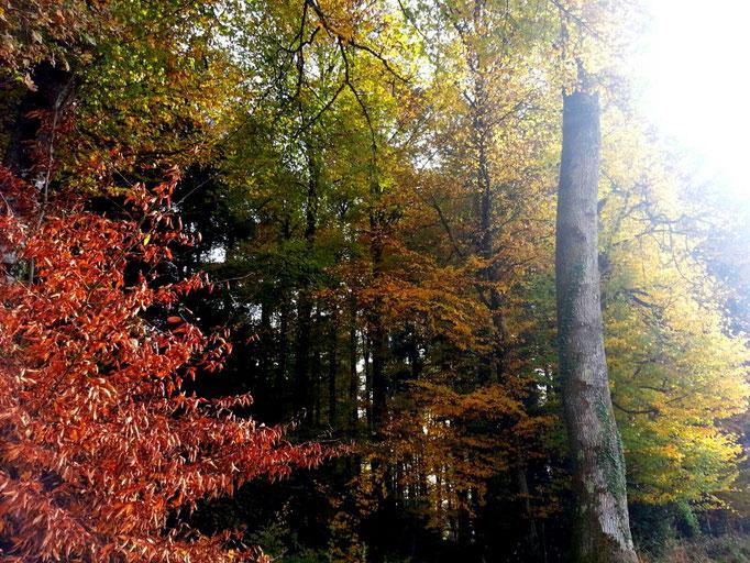 Prachtvoller Herbstwald (Foto N. Zarbo)