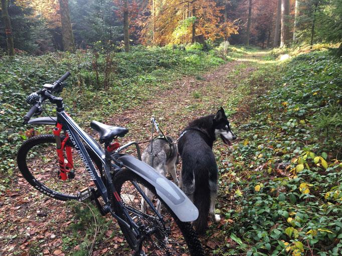 Durch diesen schönen Herbstwald laufen, ab und zu anhalten und sich etwas umschauen, das ist jetzt von Bedeutung in meinem Alter. Schliesslich bin ich am 2. November 14 jährig geworden!