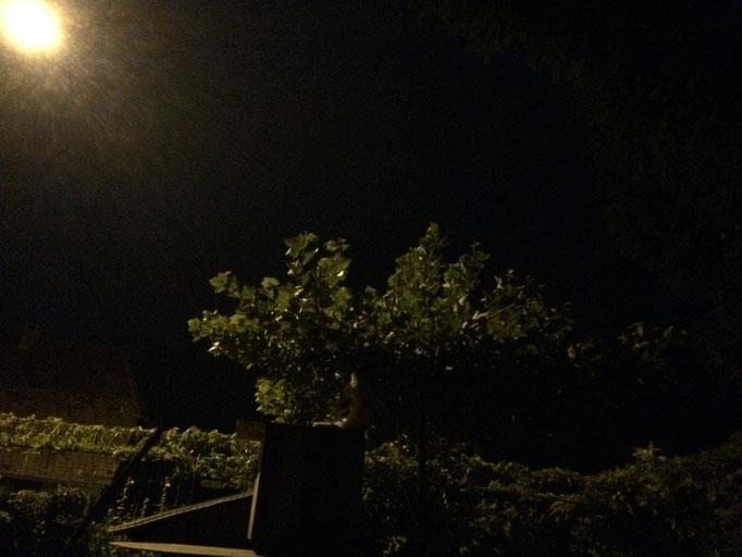 Langsam zieht der Mond seine Bahn; gut getarnt sind überall die vierbeinigen Wachposten stationiert.