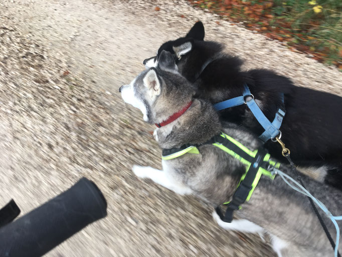 Ich mit meiner Freundin Ice. Bin ich froh, habe ich sie noch neben mir, wenn sie auch nicht viel zieht, so ist sie doch einach neben mir und dafür gebe ich ihr während dem Laufen schon mal ein Schmützi oder zwei.