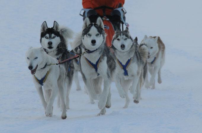 Ich führe mein Team durch Schnee und Eis