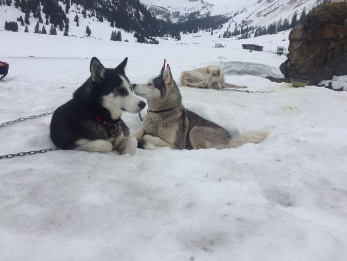 Geben und Nehmen; Arizona und Yukon