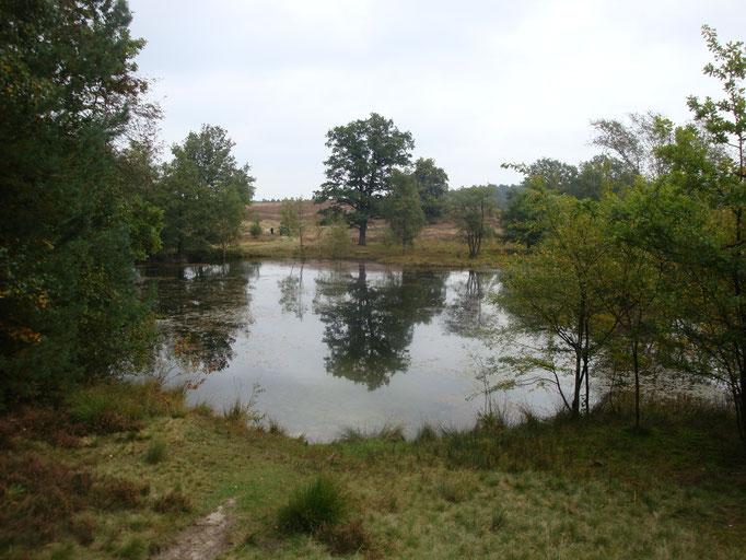 2012 -  Lüneburger Heide