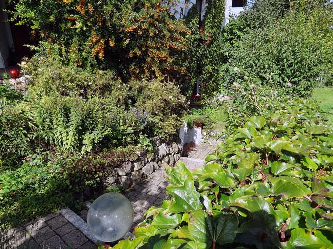 im Garten von Meir's Ferienwohnung