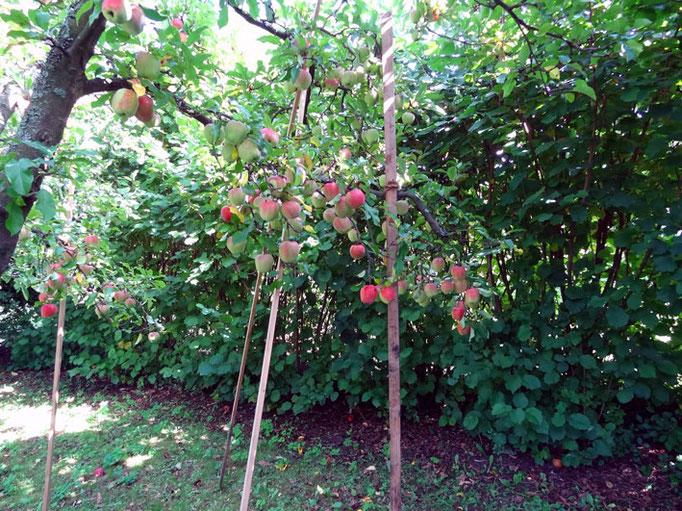 Weitläufiger Garten mit altem Apfelbaumbestand