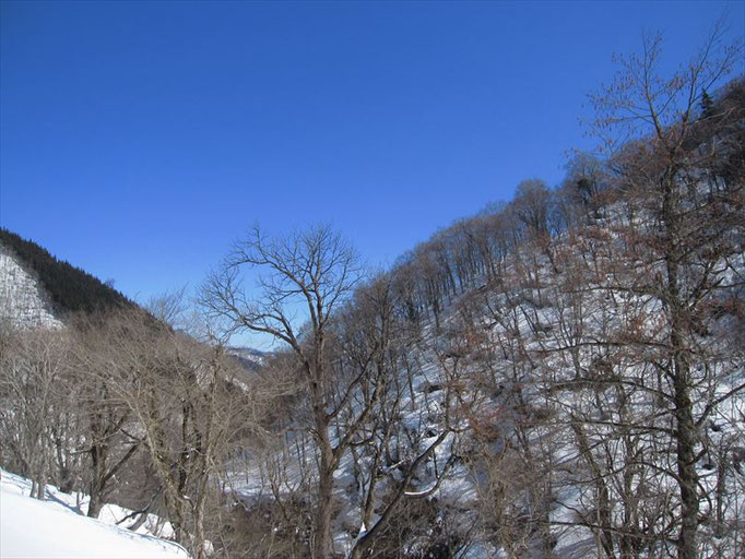 色鮮やかだった山が一転
