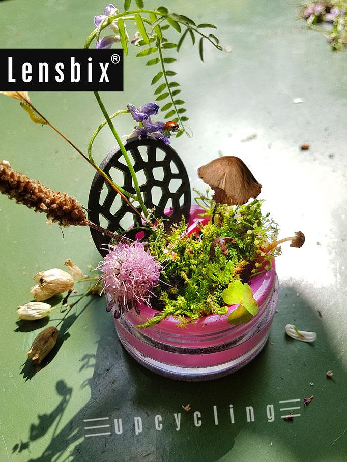 Lensbix upcycling -  Artenvielfalt im Minibiotop - mit Pilz und allerlei lebenden Miniaturen /  Kontaktlinsenbehälter / Kontaktlinsenbox / Box für Kontaktlinsenaufbewahrung  / #Kontaktlinsendose / #Kontaktlinsen-behaelter