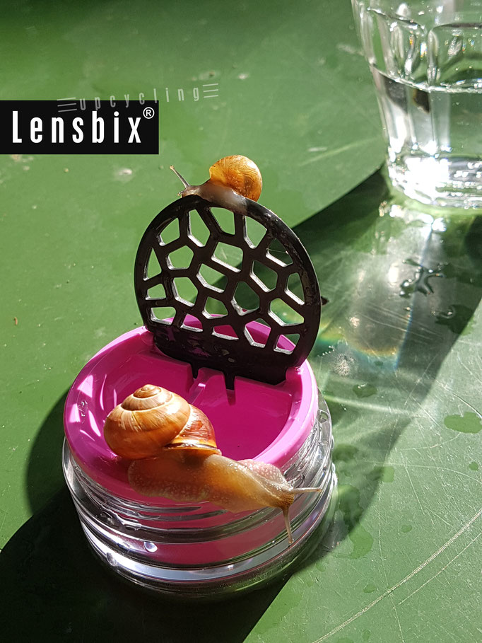 lensbix upcycling - Chillen am Schneckenpool  / Kontaktlinsenbehälter /Kontaktlinsenbox / Box für Kontaktlinsenaufbewahrung  / Kontaktlinsendose/ Kontaktlinsen-behaelter