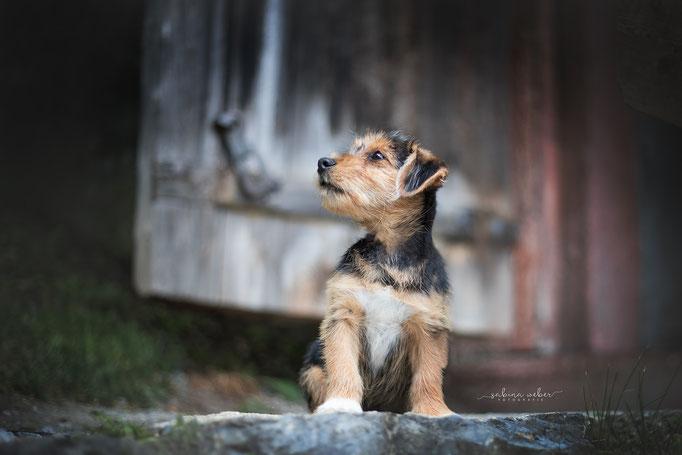 Welpenfoto Hundefoto
