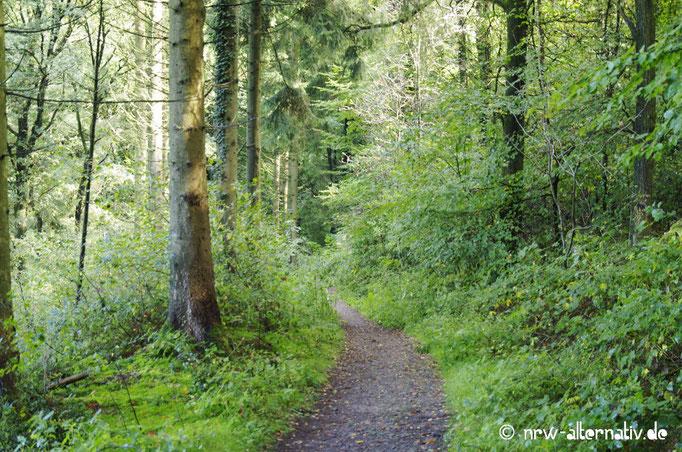 Der Pfad schlängelt sich durch den Wald