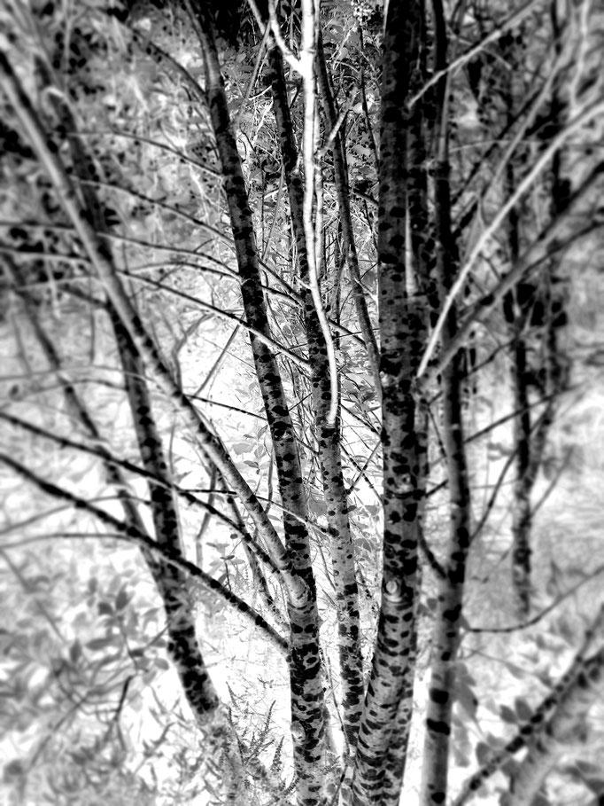 Botanischer Garten Edinburgh, 2017. Fotoprint auf Papier 30x40cm