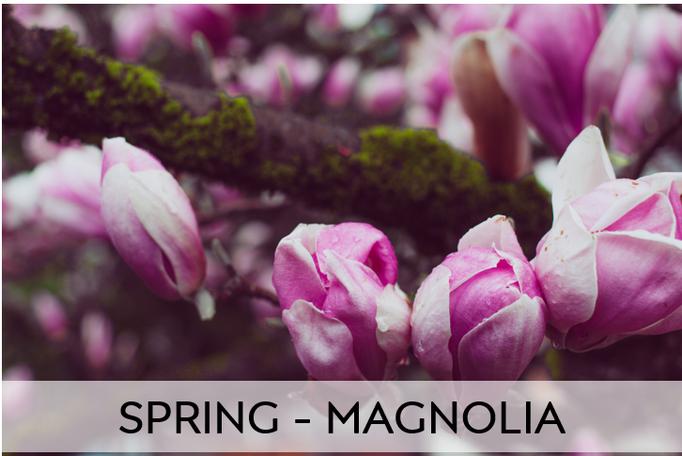 SPRING - MAGNOLIA