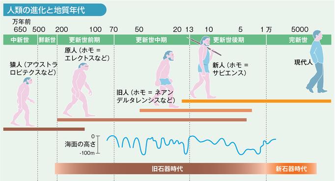 人類の進化を分かりやすく図解