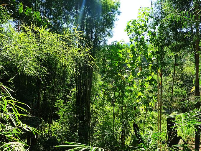Durch die Wälder von Chiang Mai