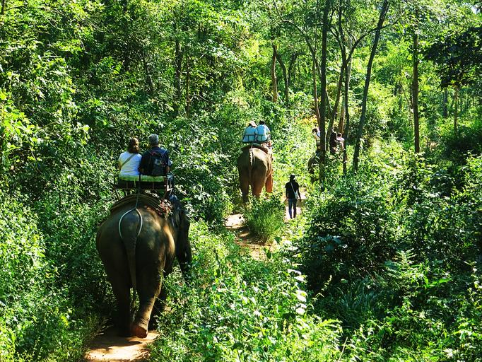 Ausflug mit Elefanten