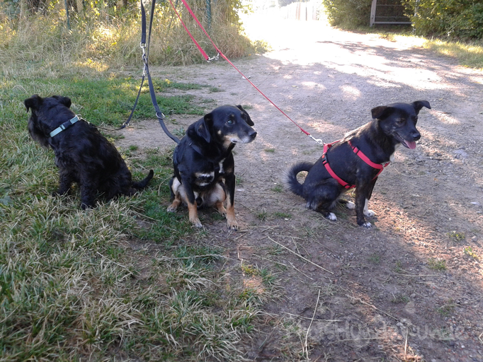 Jerrx, Lason & Püppi