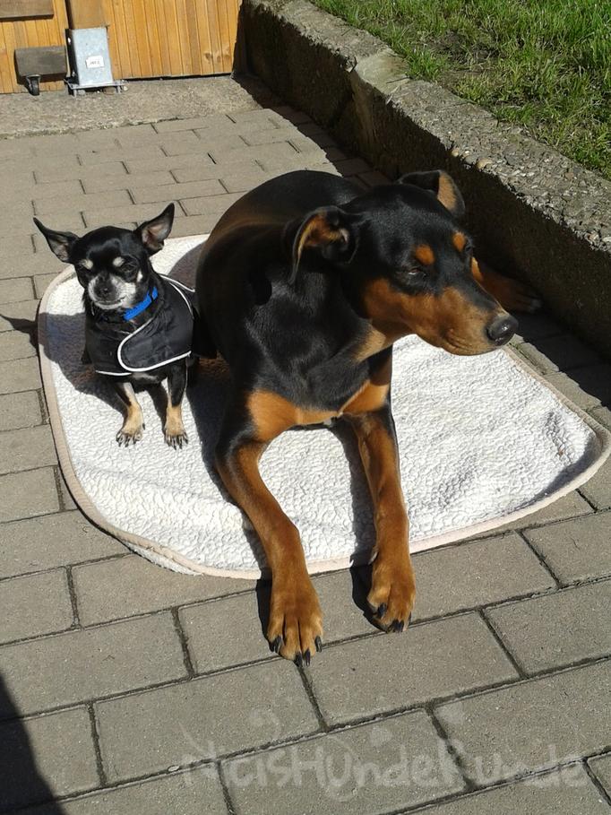 Hugo & Shira