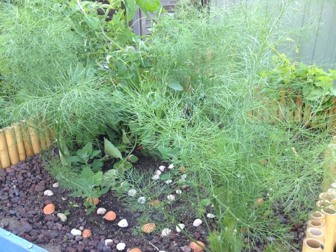 Fenchel! Und Tomate. Und Kräuter. Irgendwo.