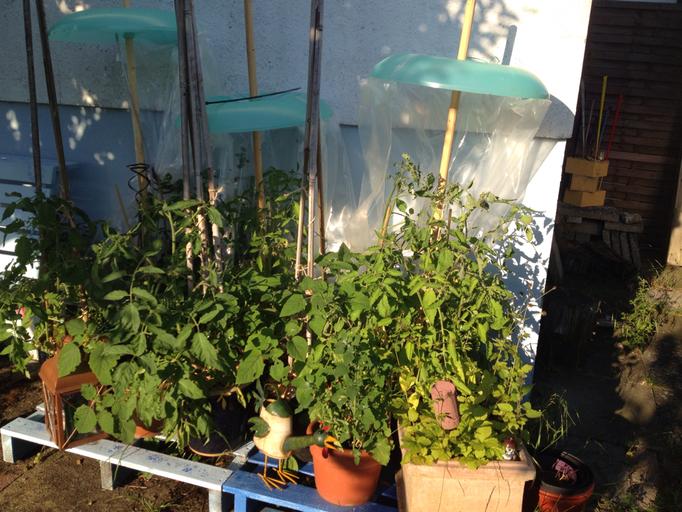Tomaten, Gurken, Physalis