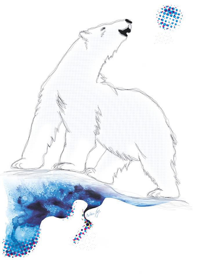 Shirtmotiv Eisbär