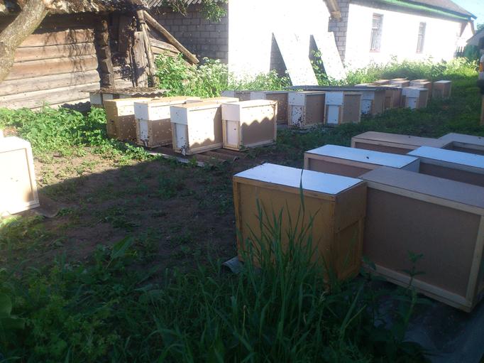 Пчелопакеты перед отправкой